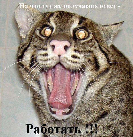 Мой аватар - моя любимая кошка.  ZOSKA написал(а). Это случайно не ваш?